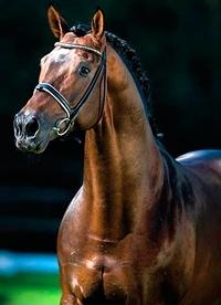 aceite alimentacion caballo
