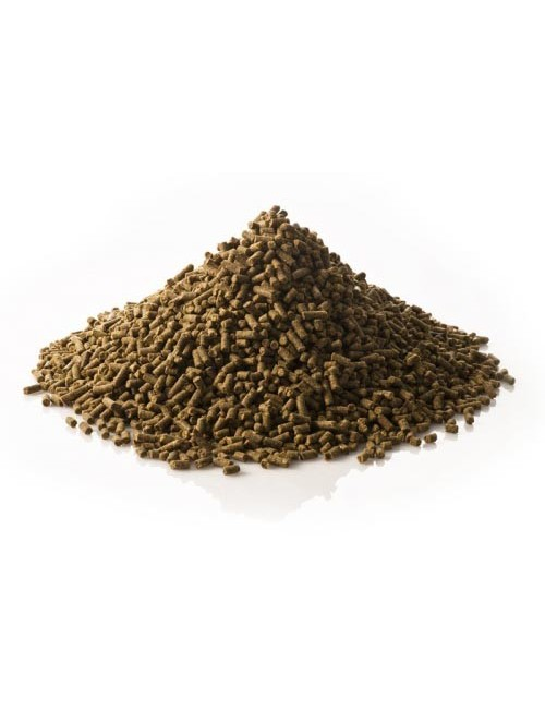 Betacarotin de St. Hippolyt ayuda a evitar problemas de fertilidad en yeguas y sementales