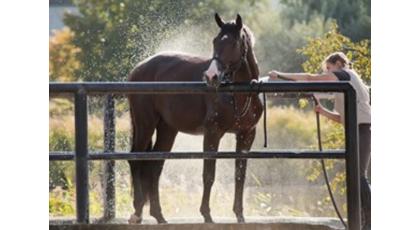 Manejo del caballo durante el verano