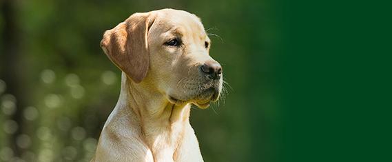 para-perros-st-hippolyt-verde